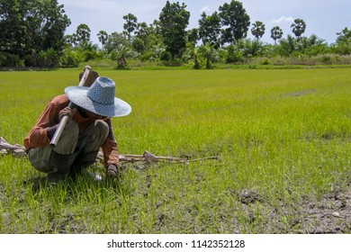 The farmer wearing the booths and a hat hold a hoe on his shoulder and looking at a rice field which growing on the cracked ground.