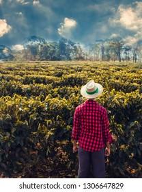 Farmer in a wheat coffee field