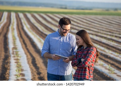 Farmer woman and agronomist with tablet talking in vegetable field with foil on soil