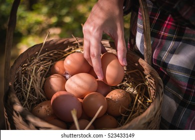 farmer woman gathering fresh eggs into basket at hen house in countryside morning