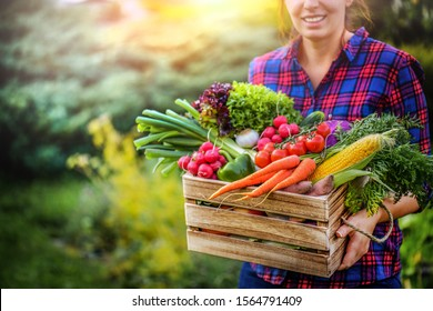 Farmer woman holding wooden box full of fresh raw vegetables. Basket with vegetable (cabbage, carrots, cucumbers, radish, corn, garlic and peppers) in the hands.  - Shutterstock ID 1564791409