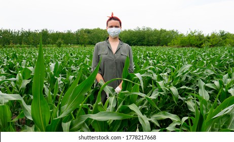 Farmer woman with a medical mask on here face in corn filed.