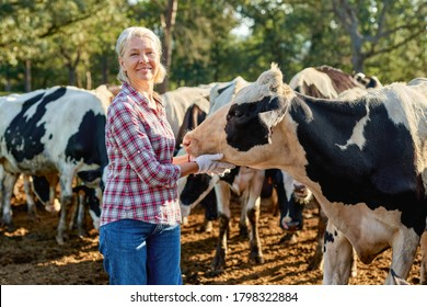 Farmer woman on cow farm around herd