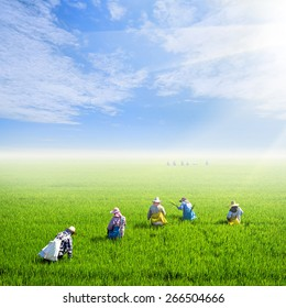 farmer work on rice field with nice sky