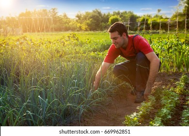 Farmer working in garden and looking on plants