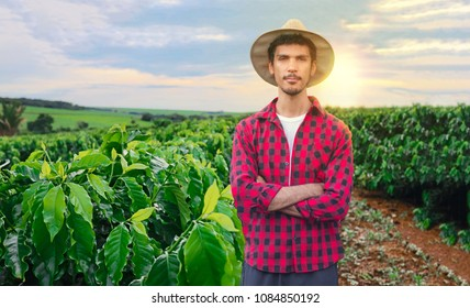 Farmer or working with hat on coffee field at sunset field