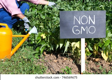 Farmer working in the non-GMO vegetable garden