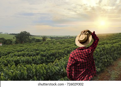 Farmer working on coffee field at sunset outdoor