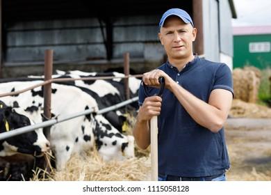 Farmer is working on cow farm