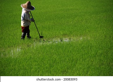 farmer working in the paddy field in the countryside