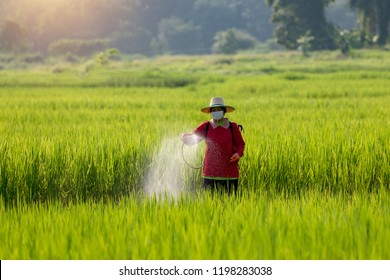 Chemical Fertilizer Images, Stock Photos & Vectors