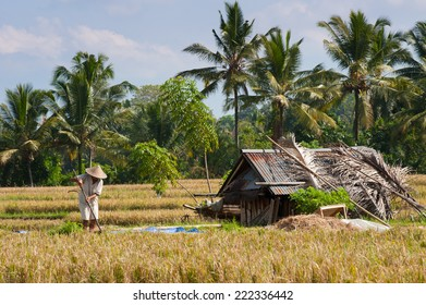 A farmer working in a rice field; Ubud, Bali.