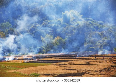 Farmers burned in preparation for planting,Blur images for background