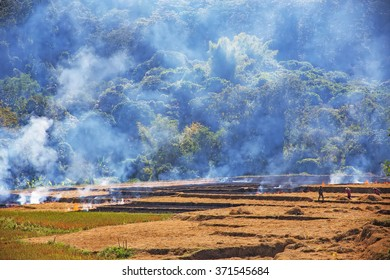 Farmers burning fields to prepare for cultivation.