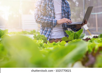 Farmers are checking the quality of organic vegetables before making a note and sending them online via a laptop.