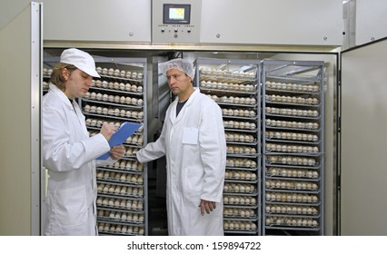 Farmers controlling chicken eggs in incubator