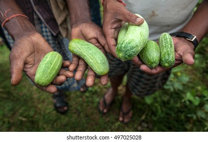 Farmers from Dhanwe Purana presents cucumbers which they grew in a dry region of Jharkhand, India