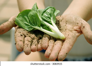 A farmers dirt caked hands holding out a green vegetable