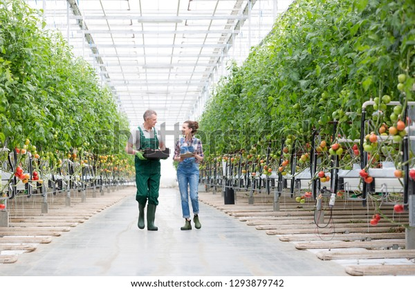 Farmers discussing while walking amidst plants in greenhouse