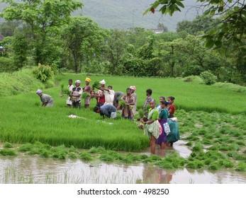 farmers farming on a rainy day