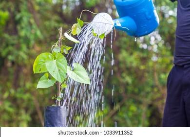 Farmers are feeding trees, pulchellum, Roxb, Wall, APOCYNACEAE, ASCLEPIADOIDEAE.