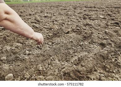 Farmer's female hands planting seed in soil