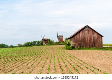 Farmers field by traditional windmills at the island Oland in sweden