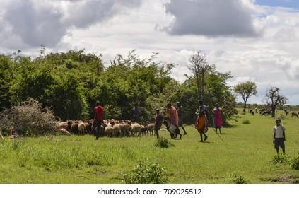 Farmers with a flock of sheep, from Nairobi to Masai Mara, Kenya, 03-Dec-2015