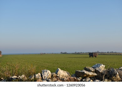 Farmers green field with farm wagons at the swedish island Oland