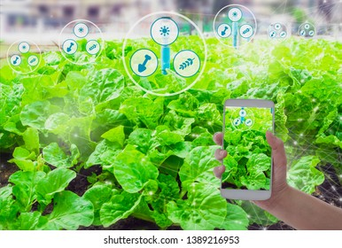 Farmers hand hold smartphone monitor and track agricultural produce through modern wireless networks with 5G technology in farms, concept Agriculture technology for development with internet of things