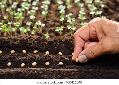 Farmer's hand planting seeds in soil - Shutterstock ID 400411348