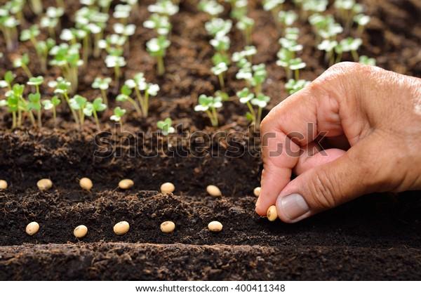 L'agriculteur plante des graines à la main dans le sol