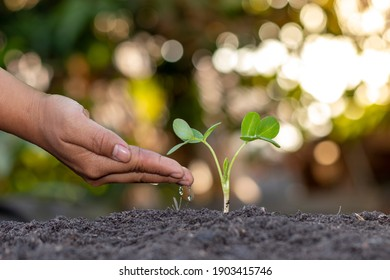 Farmer's hand planting, watering young plants in green background, concept of natural plant seeding and growing.