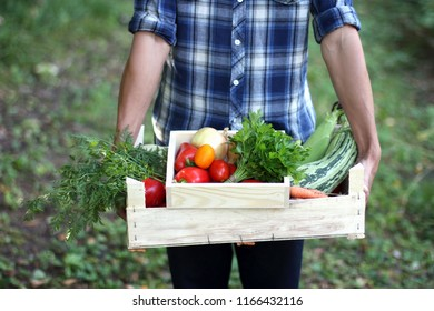 Farmers hand with two wooden boxes with fresh vegetables. Farmer picking vegetables.