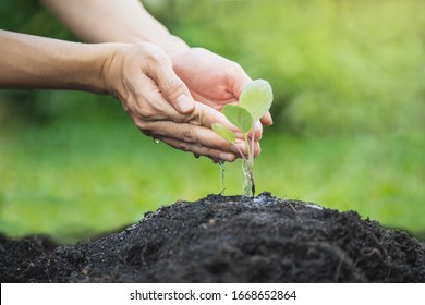 Farmer's hand watering a young plant. Seedling are growing in the soil with sunlight.Use a watering hand. Young tree Tree Planting Tree care Watering a tree in nature.