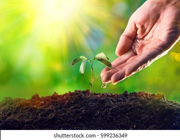 Farmer's hand watering a young plant. Young plant growing in the morning light, new life growth. Ecology, money saving, development or business concept