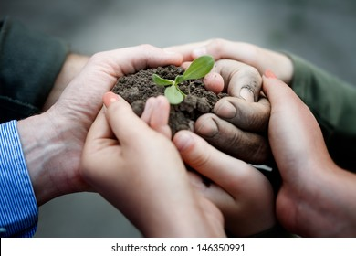 Farmers hands holding a fresh young plant. New life and environmental conservation concept