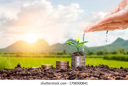 Farmers' hands are watering trees on top of coins stacked on a blurred natural background and natural light with financial growth ideas.