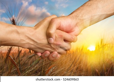Farmers handshake over the wheat corp.