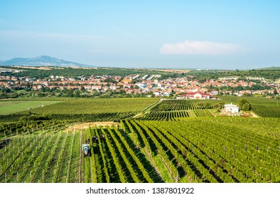 Farmers are hard working on generous fields of great Moravia