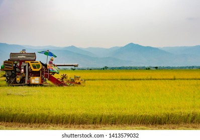 Farmers harvest rice by machinery in Thailand