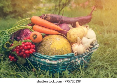 Farmers harvested a variety of vegetables in late summer in the organic garden. Healthy, sustainable food. Autumn. Copy space.