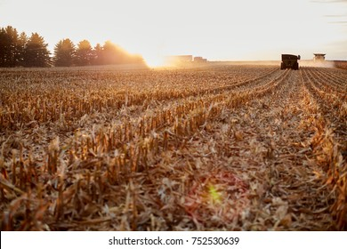 Farmers harvesting maize during golden hour with the rows of cut stubble backlit by the setting sun with a combine harvester and semi in the distance