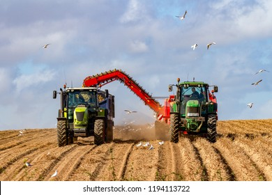 Farmers harvesting potato crop from an autumn farm in Norfolk, UK