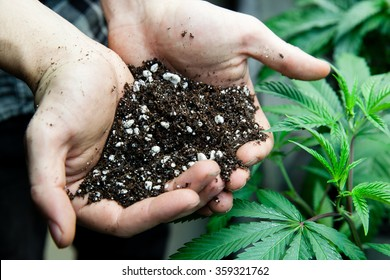 farmers holding rich soil for his marijuana plants