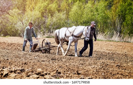 Farmers with horse drawn drill working the field.