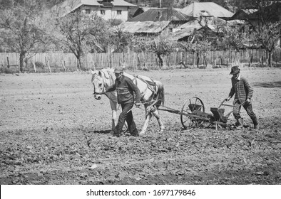 Farmers with horse-drawn drill working the field. Horse-drawn seed drill at work. Vintage picture.