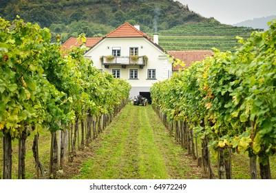 Farmers House in an austrian  Vineyard