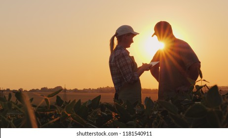 Farmers man and woman communicate in the field at sunset. Use a tablet