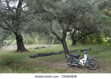 Farmer's old  Motorcycle in Greek olive grove. Corfu. September 2017. for editorial use only